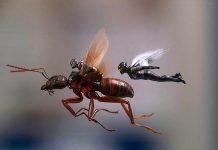 """""""Ant-Man y la Avispa"""" anima un poquito la taquilla española"""